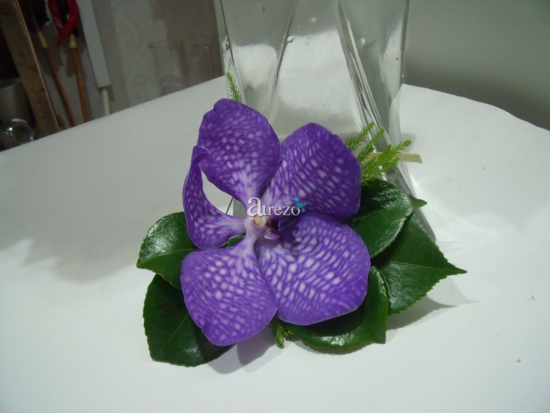Orquidea Morada arriaba