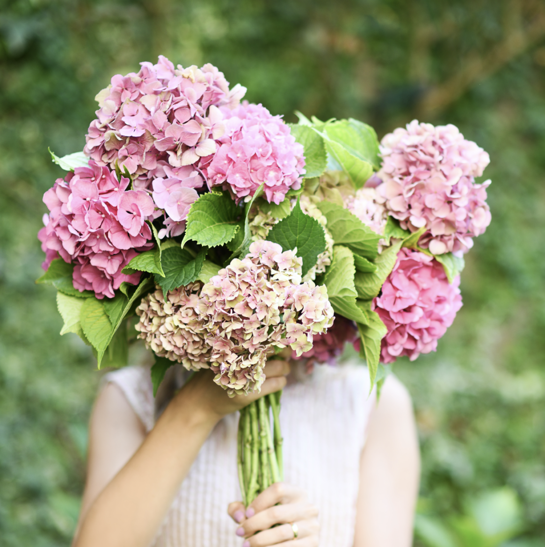 Flores De Temporada Otono Hortensia