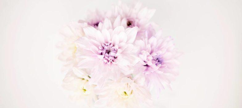 Las Flores De Temporada En Otono